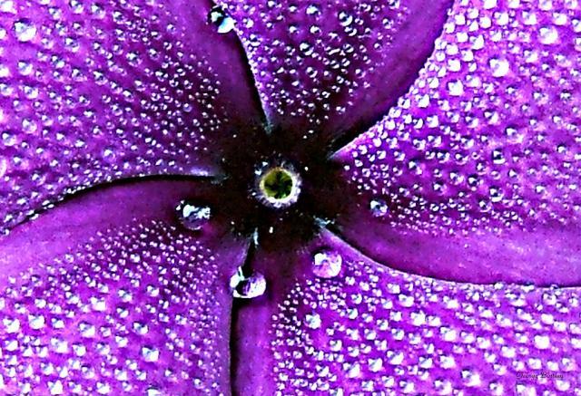 dewdrops-on-a-purple-flower-george-bostian.jpg